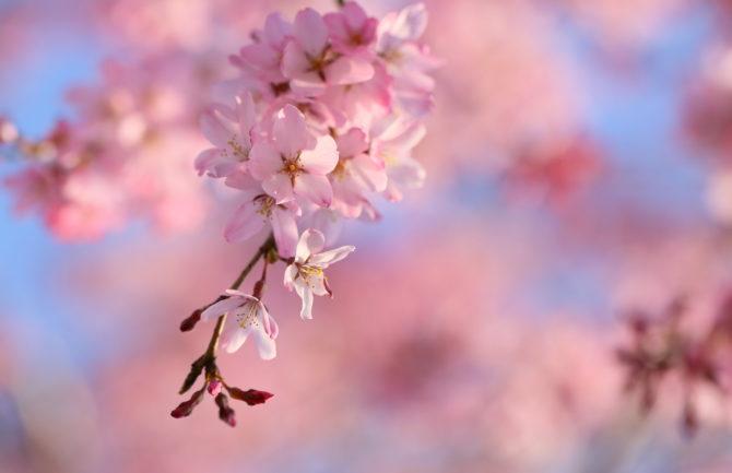 Venta online de productos de segunda mano japoneses a todo el mundo