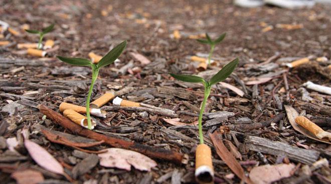 Colillas de cigarrillos que se convierten en plantas