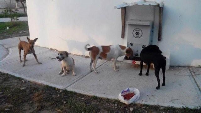 Las mascotas también tienen su espacio  en la ciudad