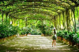 Arborización de las Calles para Amenizar el Calor e Mejorar la Calidad del Aire