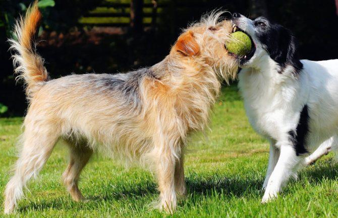Cuidado de perros en vacaciones