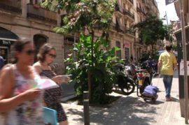 Micro jardines urbanos contra el impacto de la contaminación del aire