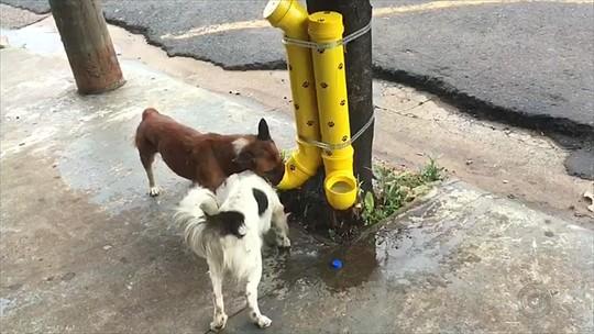 Comedero-bebedero para animales callejeros