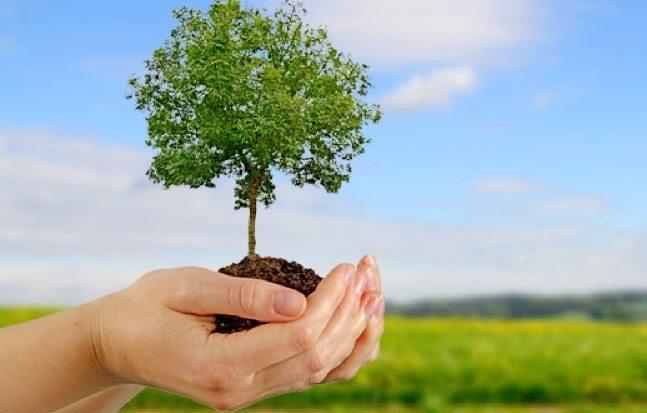 Plantación ecológica.