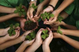 Educación medio ambiental como asignatura en el colegio.