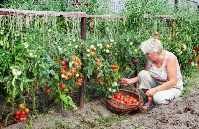 Mercado ecológico en zonas rurales