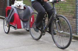 Alquiler de bicicletas con transportin para animales