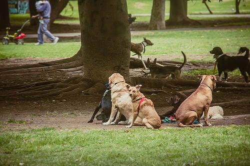Comederos para perros abandonados