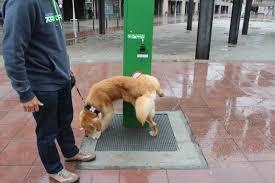 ¡Granada más limpia, el sitio ideal para hacer desaparecer las necesidades de tus mascotas!