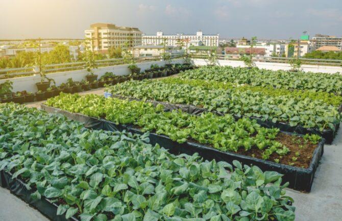 Huertos sostenibles en el centro de la cuidad