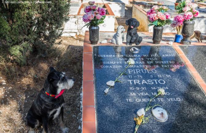 Cementerio para mascotas