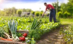 App que permita la conexión de agricultores con consumidores responsables