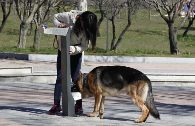 Fuentes urbanas para perros