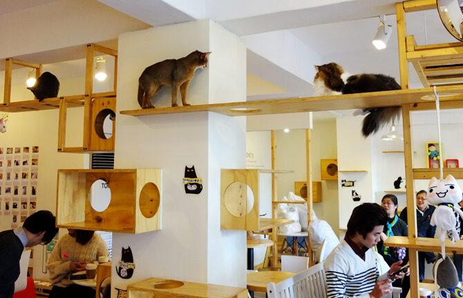 Cat`s Café