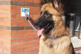 Parking para perros en la puerta de supermercados o tiendas