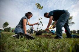 Reducir la contaminación atmosférica de Granada mediante una reforestación masiva