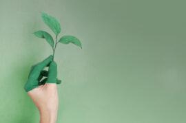 Centros de compostaje comunitario